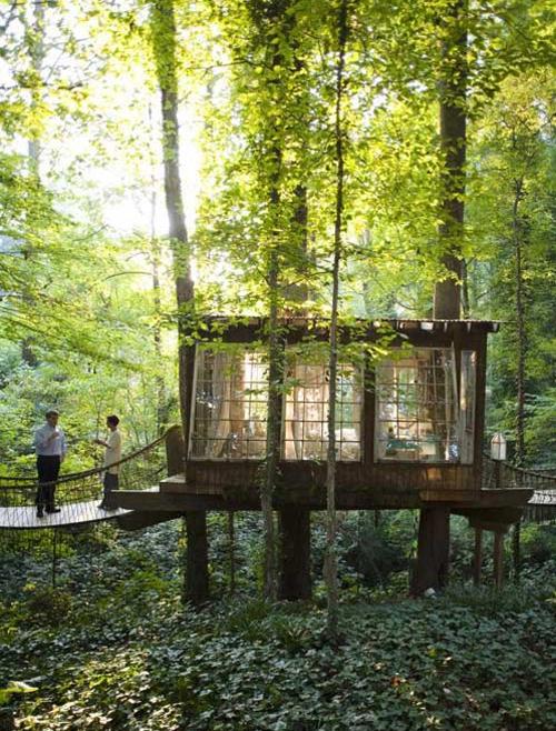 glass treehouse